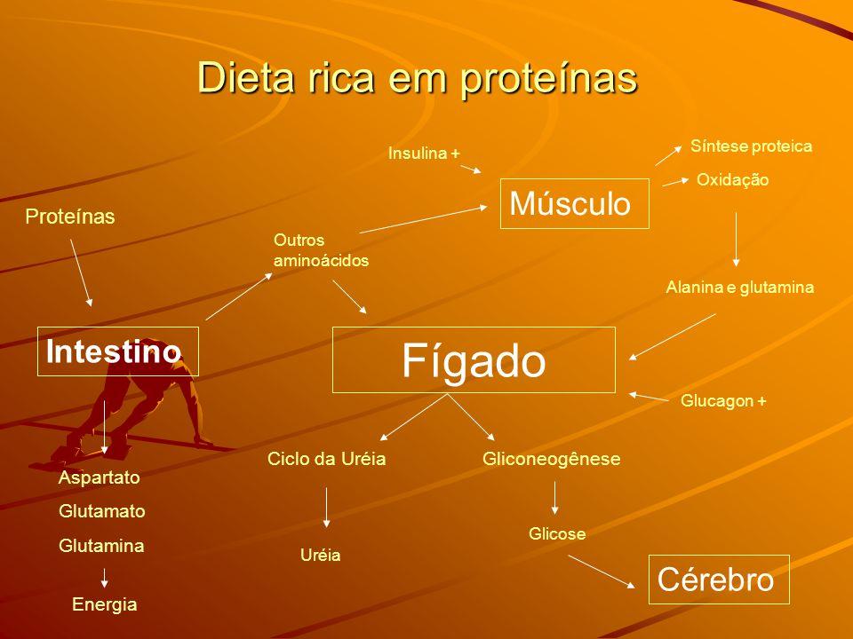 Dieta rica em proteínas