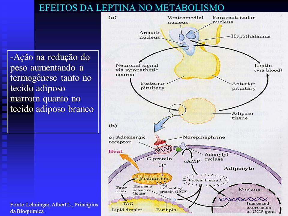Acadêmico Gustavo Gimenes Sieck Ad2009 Disciplina de