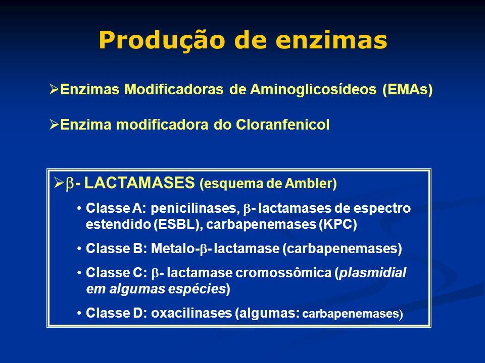 Produção de enzimas - LACTAMASES (esquema de Ambler)