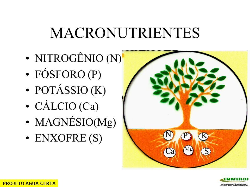 MACRONUTRIENTES NITROGÊNIO (N) FÓSFORO (P) POTÁSSIO (K) CÁLCIO (Ca)