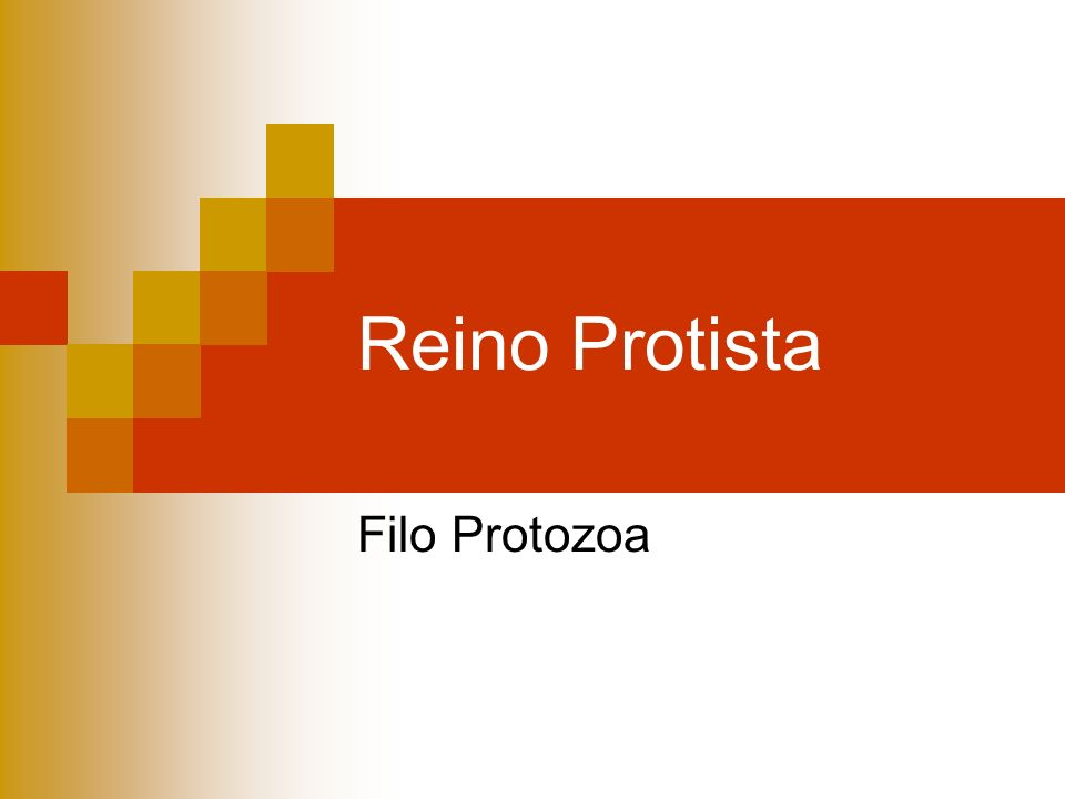 Reino Protista Filo Protozoa