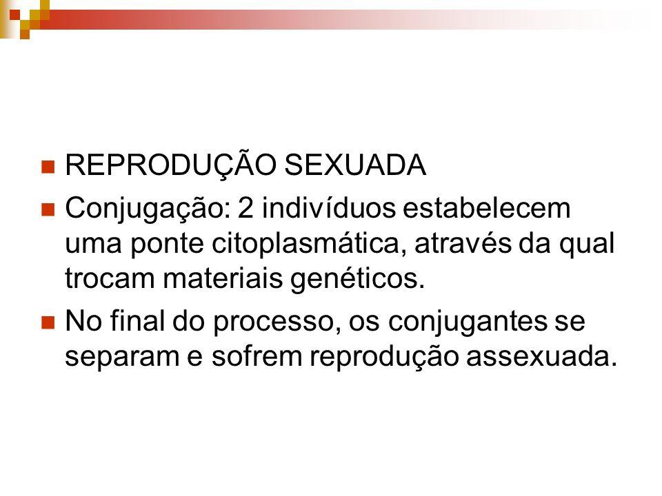 REPRODUÇÃO SEXUADAConjugação: 2 indivíduos estabelecem uma ponte citoplasmática, através da qual trocam materiais genéticos.