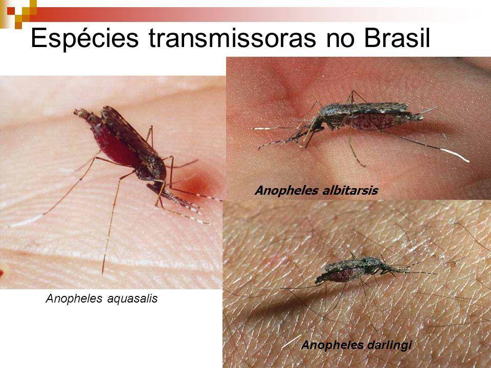 Espécies transmissoras no Brasil