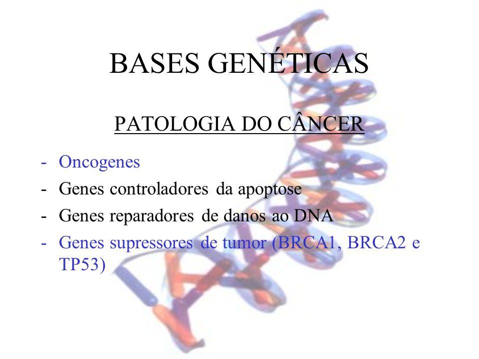 BASES GENÉTICAS PATOLOGIA DO CÂNCER Oncogenes