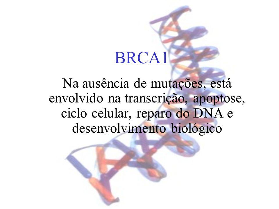 BRCA1 Na ausência de mutações, está envolvido na transcrição, apoptose, ciclo celular, reparo do DNA e desenvolvimento biológico.