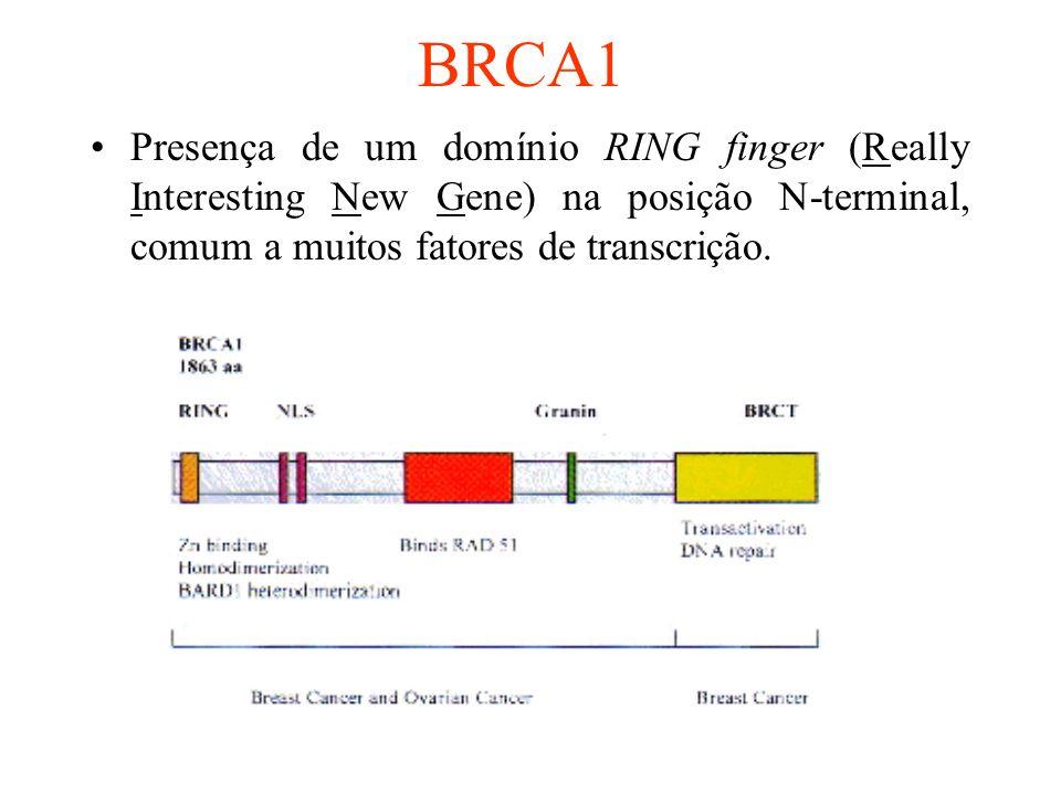 BRCA1 Presença de um domínio RING finger (Really Interesting New Gene) na posição N-terminal, comum a muitos fatores de transcrição.