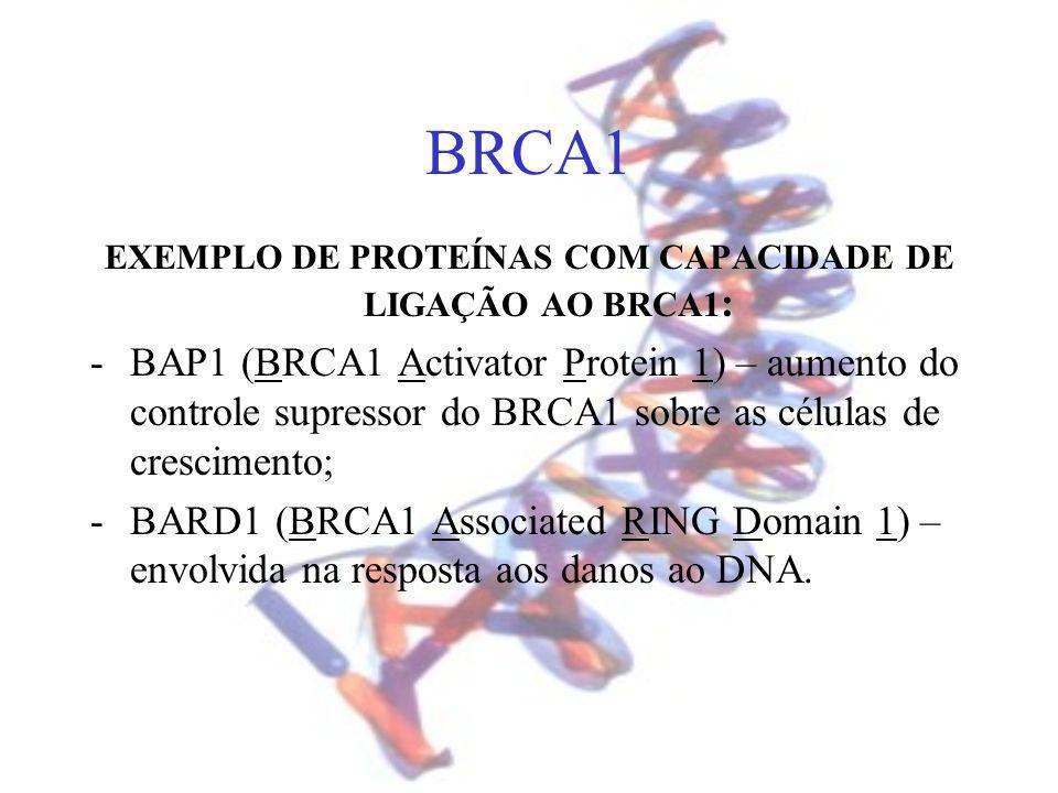 EXEMPLO DE PROTEÍNAS COM CAPACIDADE DE LIGAÇÃO AO BRCA1: