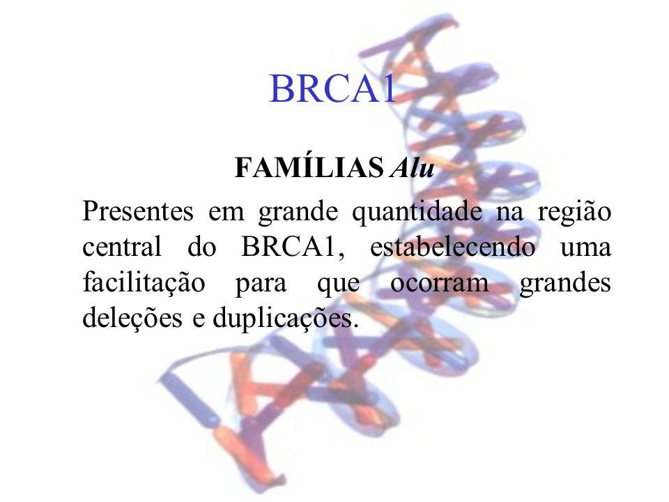 BRCA1 FAMÍLIAS Alu.