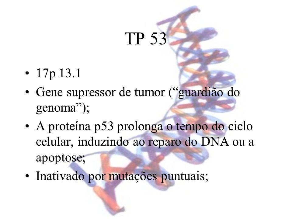 TP 53 17p 13.1 Gene supressor de tumor ( guardião do genoma );