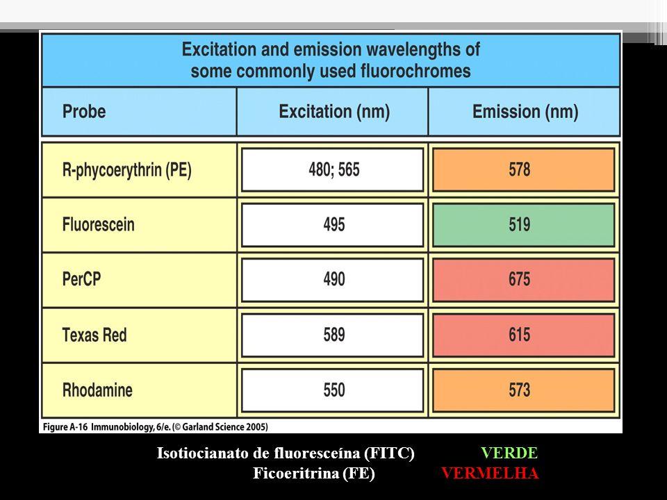 Isotiocianato de fluoresceína (FITC) VERDE