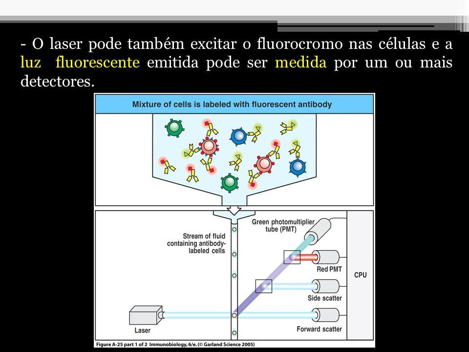 - O laser pode também excitar o fluorocromo nas células e a luz fluorescente emitida pode ser medida por um ou mais detectores.