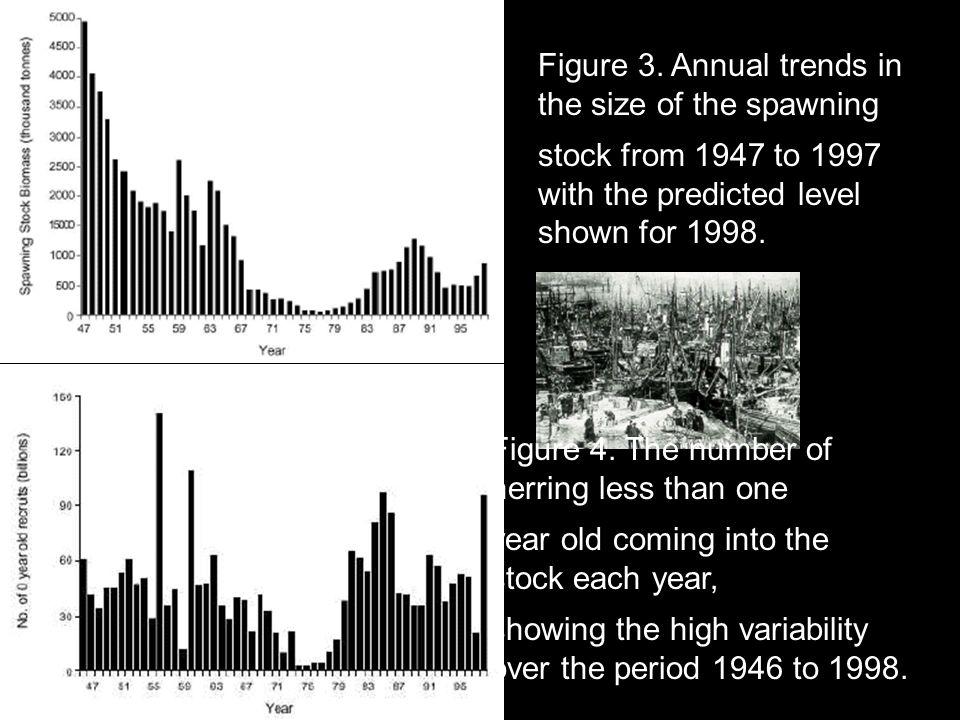 Figure 3. Annual trends in the size of the spawning
