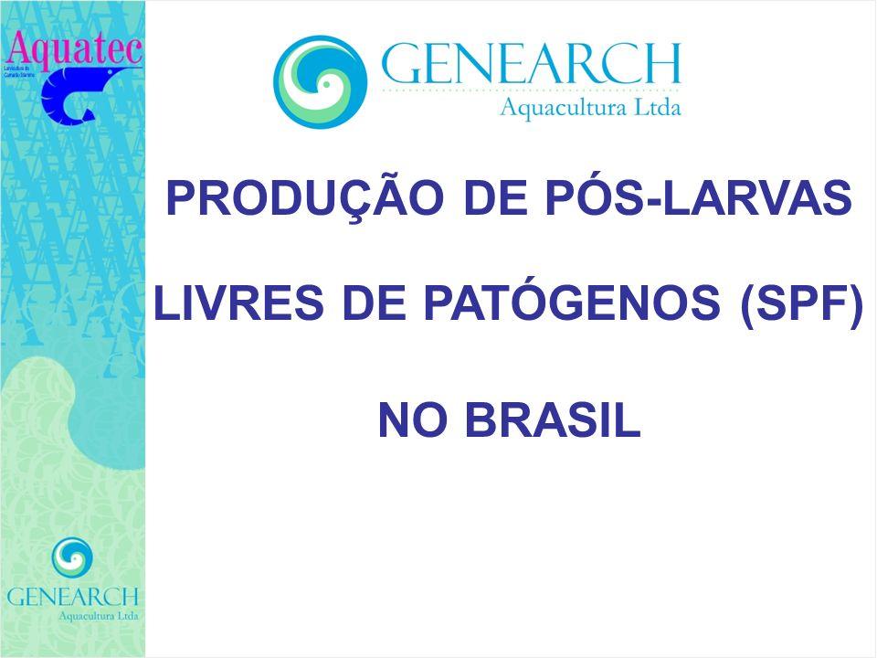 PRODUÇÃO DE PÓS-LARVAS LIVRES DE PATÓGENOS (SPF)
