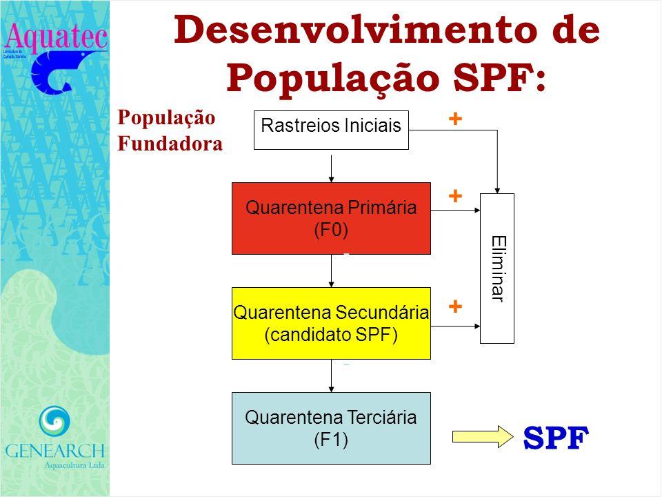 Desenvolvimento de População SPF: