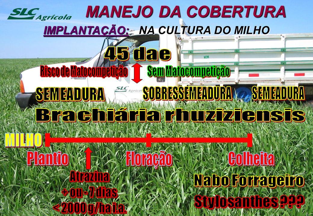 MANEJO DA COBERTURA MILHO Plantio Floração Colheita