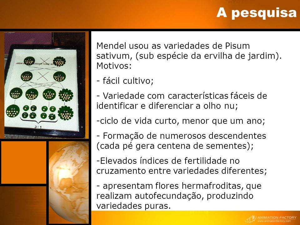 A pesquisaMendel usou as variedades de Pisum sativum, (sub espécie da ervilha de jardim). Motivos: - fácil cultivo;