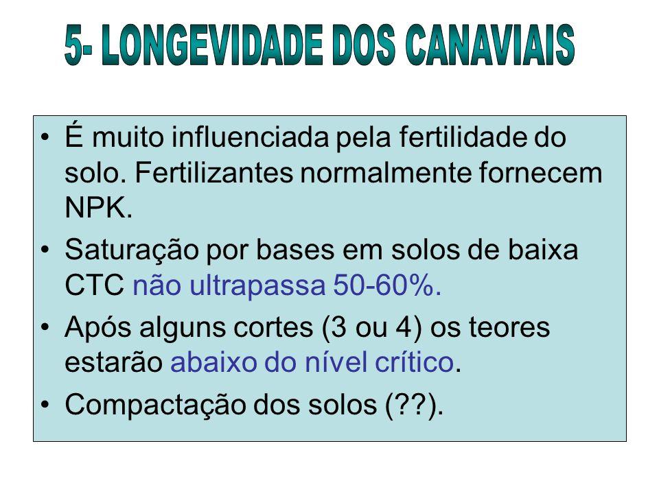 5- LONGEVIDADE DOS CANAVIAIS