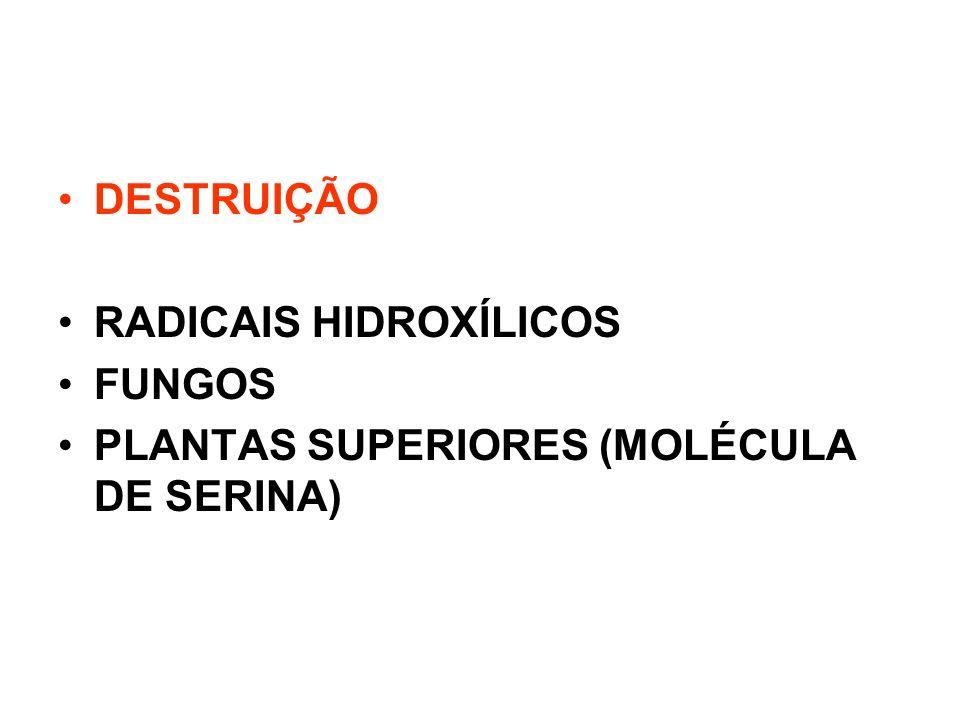 DESTRUIÇÃO RADICAIS HIDROXÍLICOS FUNGOS PLANTAS SUPERIORES (MOLÉCULA DE SERINA)