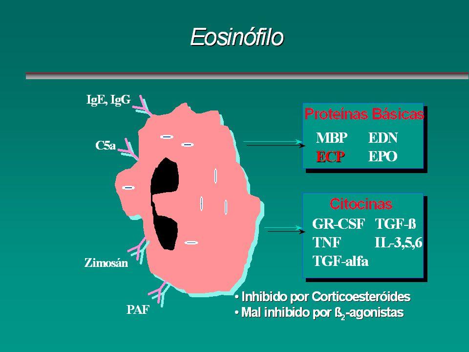 Eosinófilo Proteínas Básicas MBP ECP EDN EPO Citocinas GR-CSF TNF