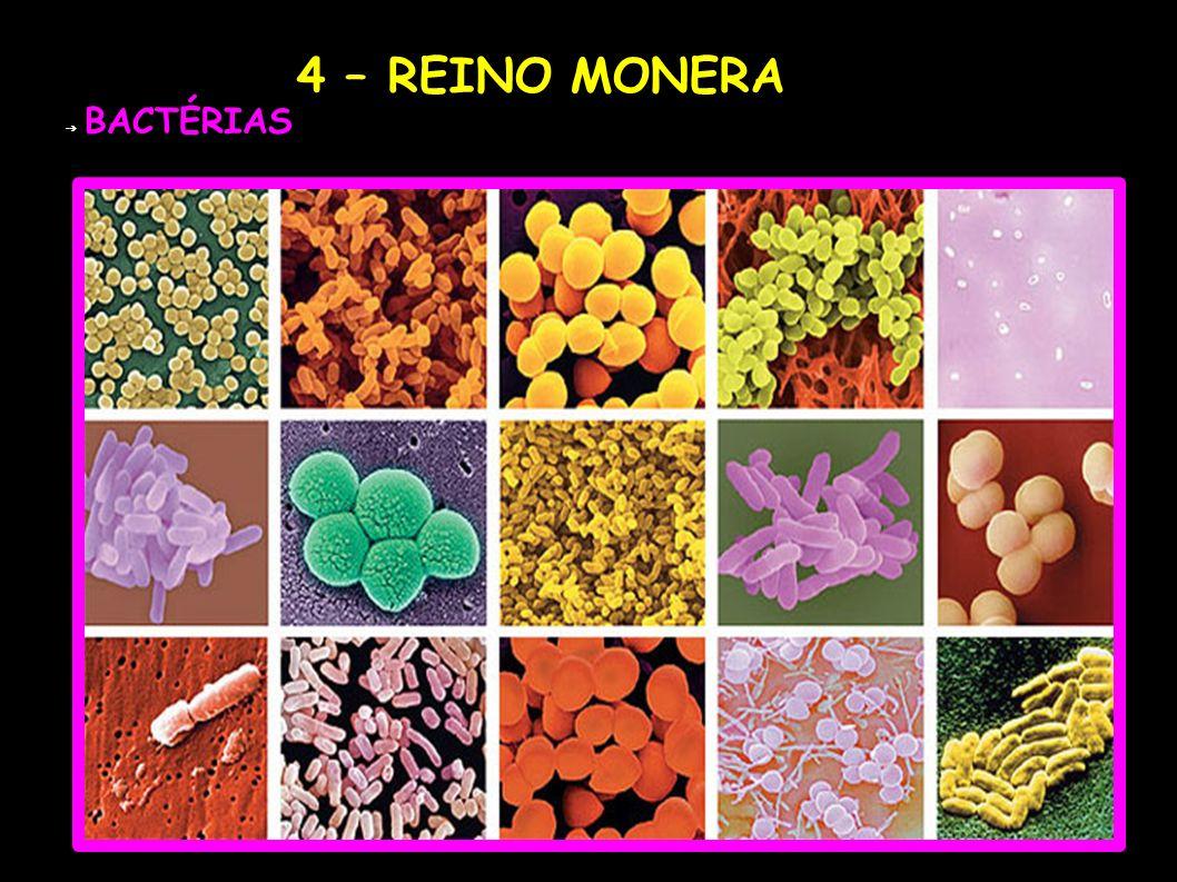 4 – REINO MONERA BACTÉRIAS