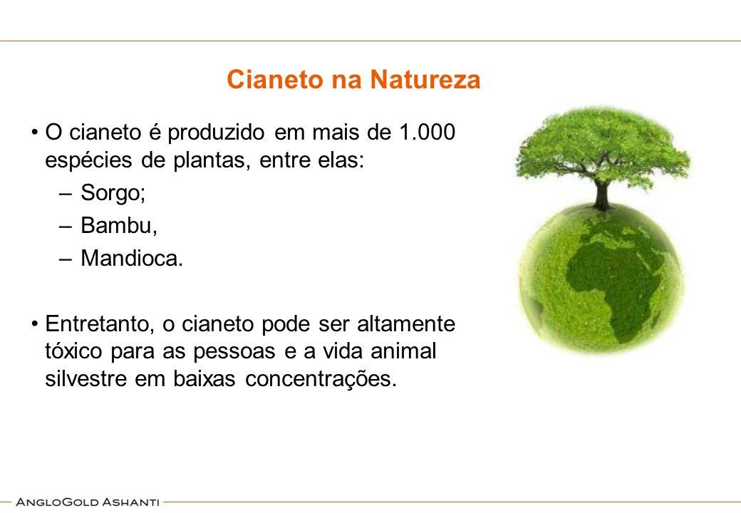 Cianeto na Natureza O cianeto é produzido em mais de 1.000 espécies de plantas, entre elas: Sorgo;
