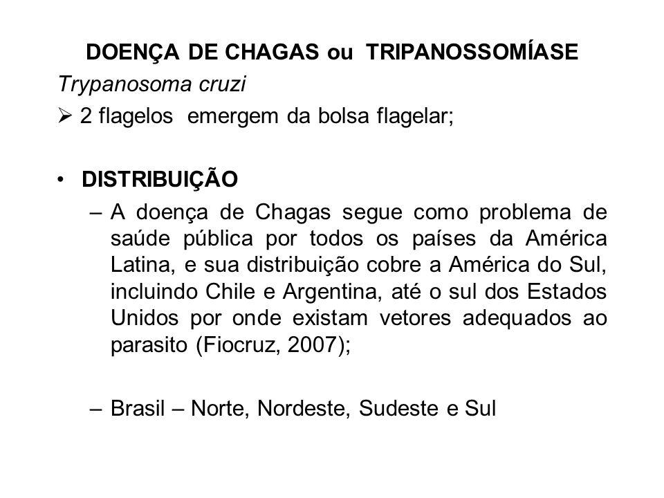DOENÇA DE CHAGAS ou TRIPANOSSOMÍASE
