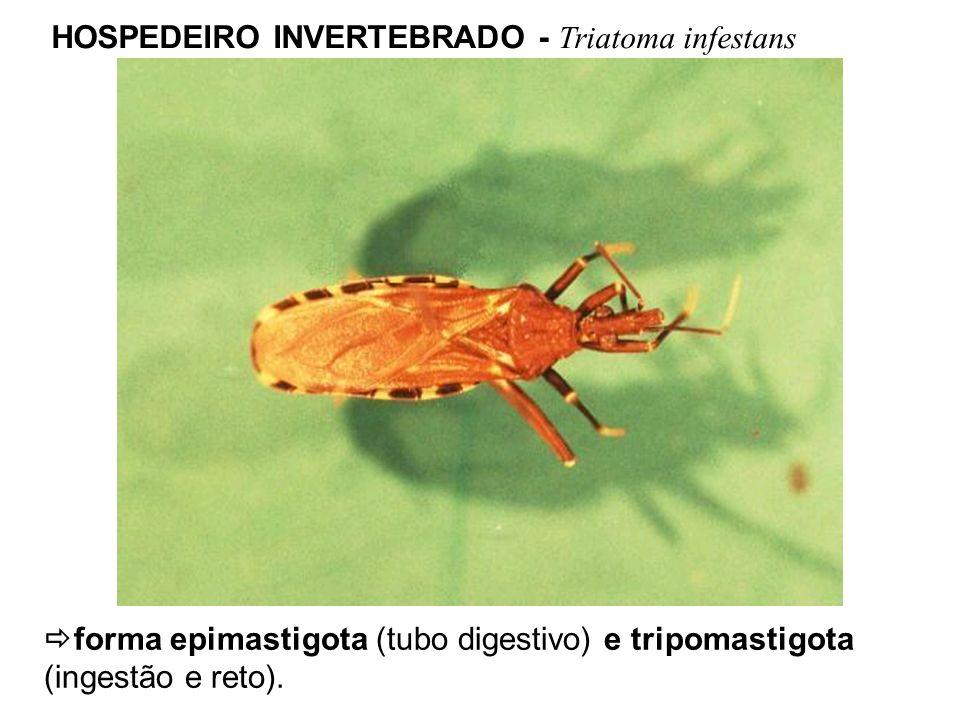 HOSPEDEIRO INVERTEBRADO - Triatoma infestans