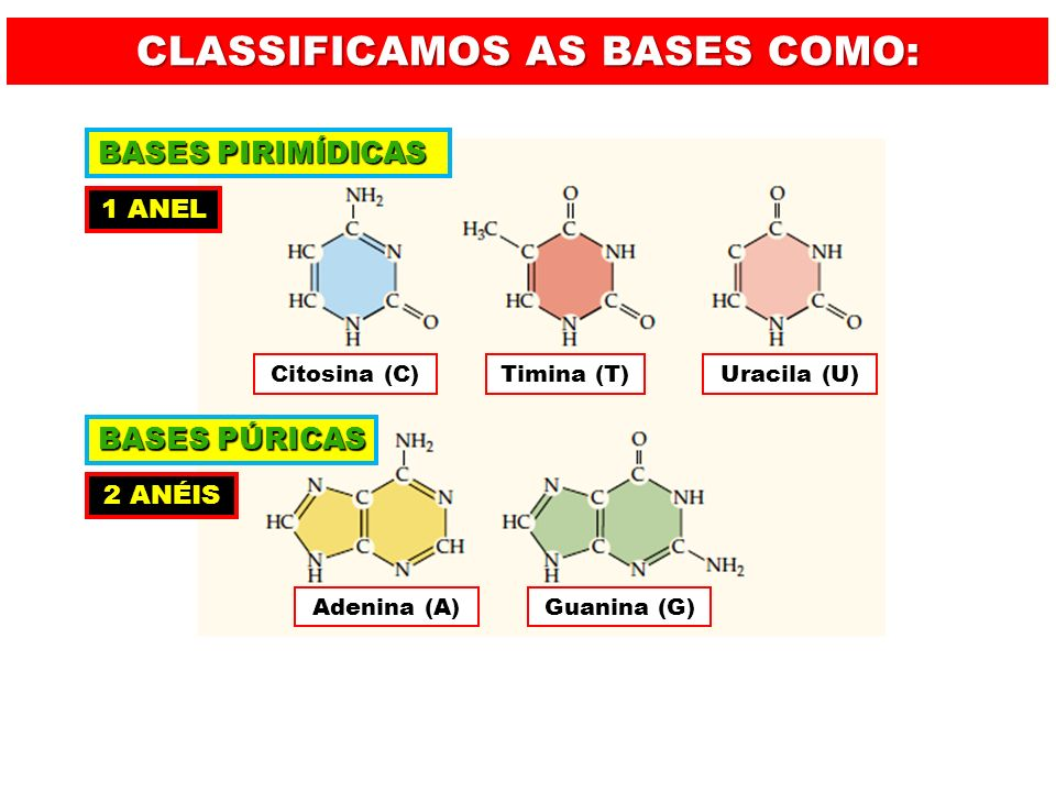 CLASSIFICAMOS AS BASES COMO: