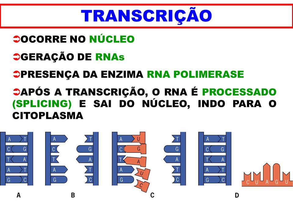 TRANSCRIÇÃO OCORRE NO NÚCLEO GERAÇÃO DE RNAs
