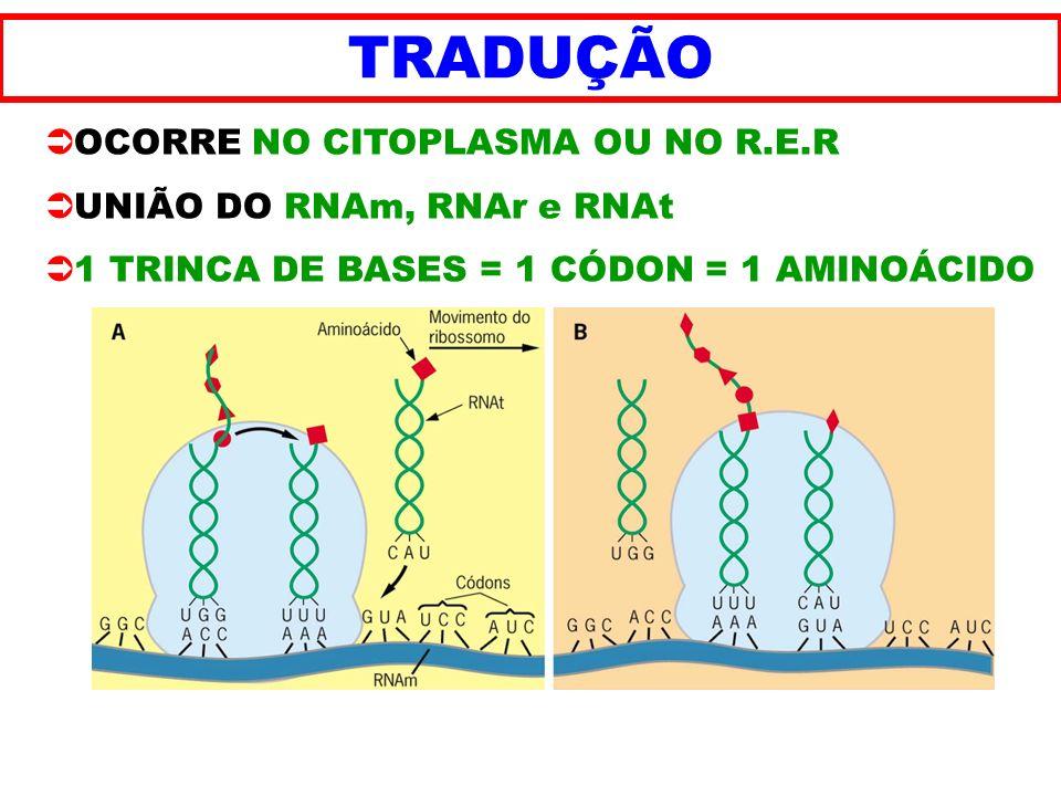 TRADUÇÃO OCORRE NO CITOPLASMA OU NO R.E.R UNIÃO DO RNAm, RNAr e RNAt