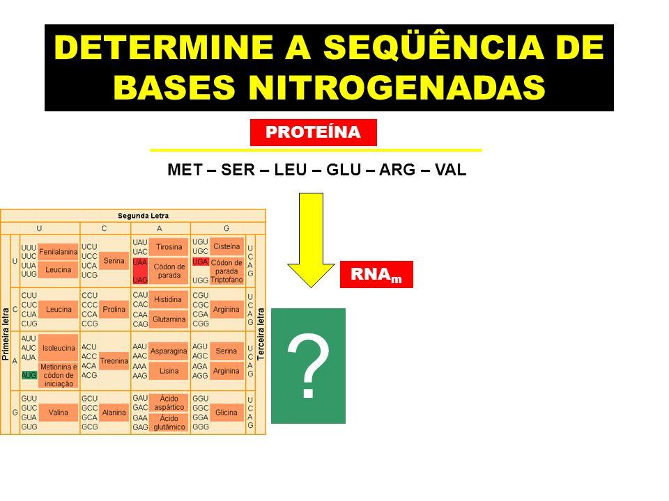DETERMINE A SEQÜÊNCIA DE BASES NITROGENADAS