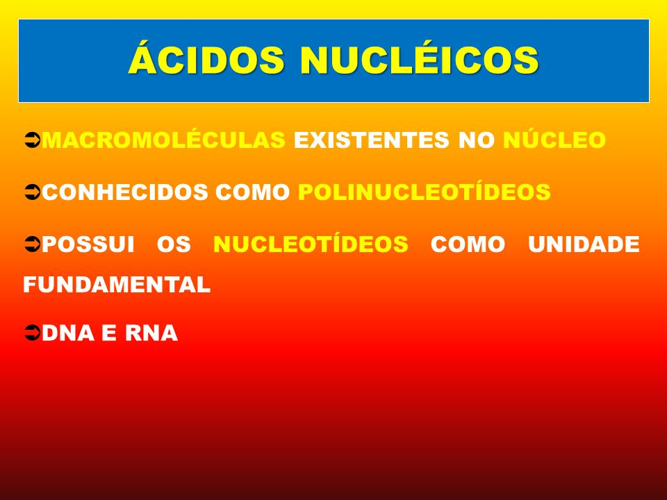 ÁCIDOS NUCLÉICOS MACROMOLÉCULAS EXISTENTES NO NÚCLEO