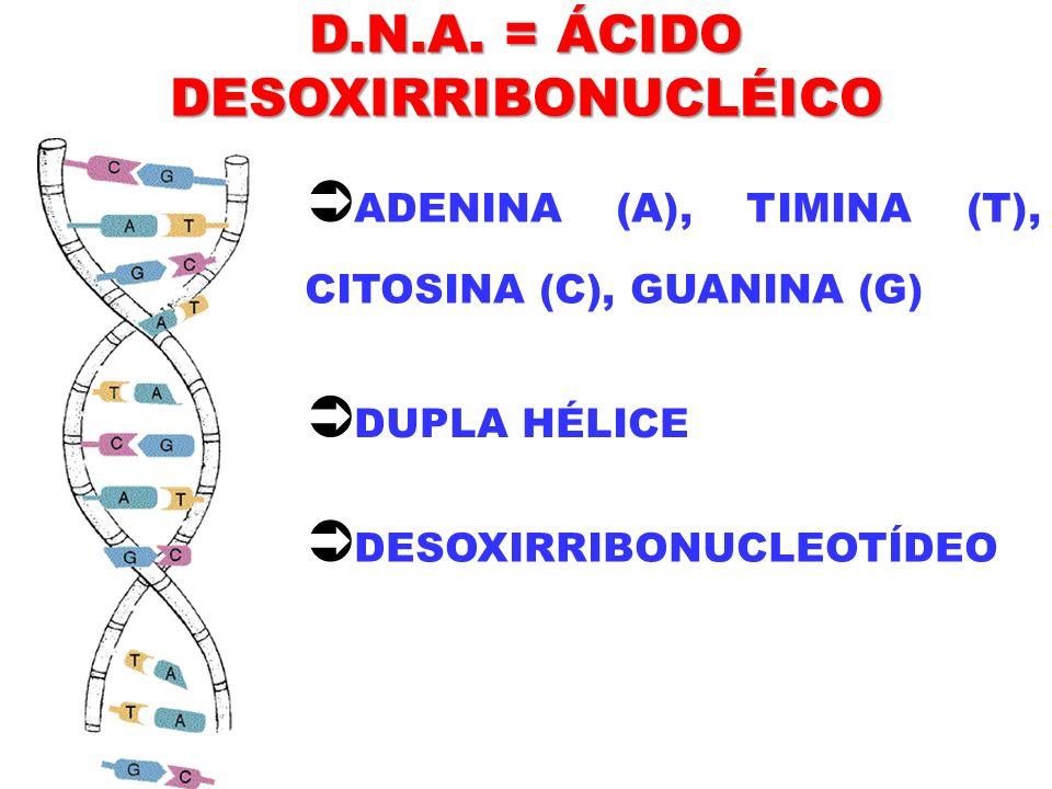 D.N.A. = ÁCIDO DESOXIRRIBONUCLÉICO