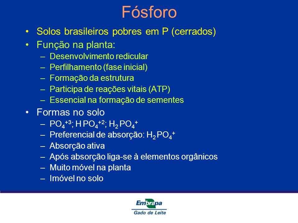 Fósforo Solos brasileiros pobres em P (cerrados) Função na planta: