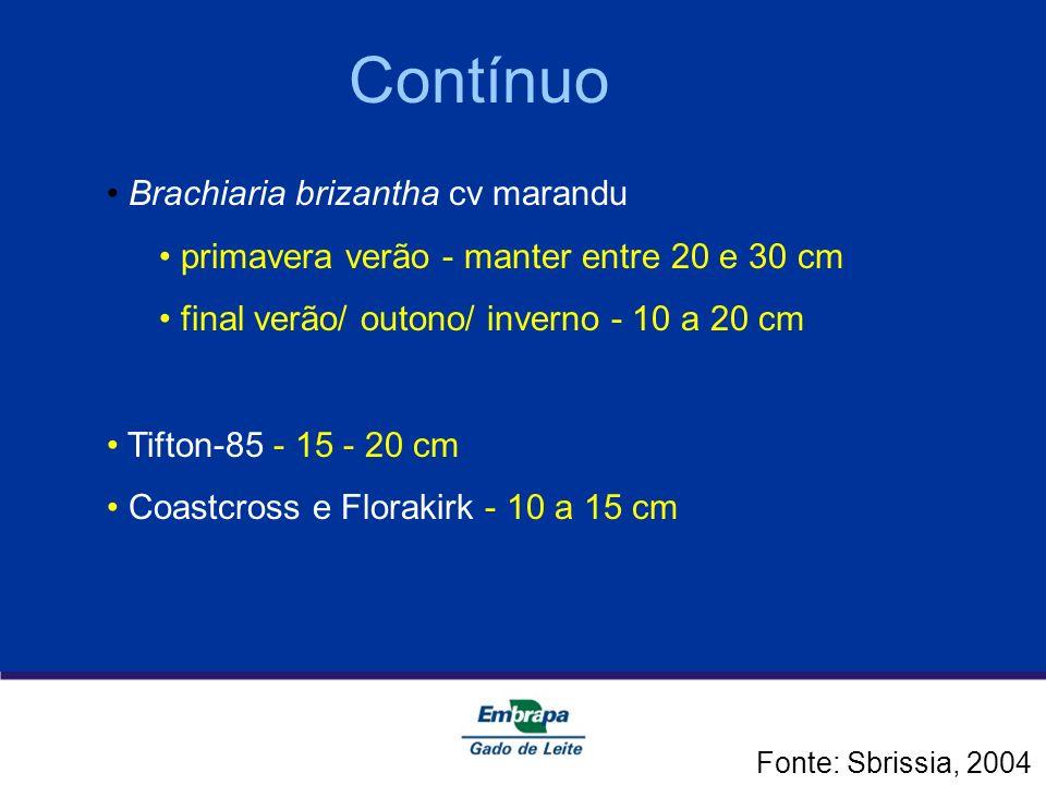 Contínuo Brachiaria brizantha cv marandu