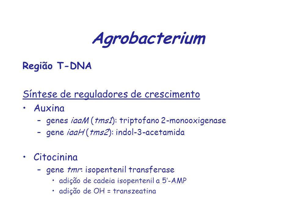Agrobacterium Região T-DNA Síntese de reguladores de crescimento