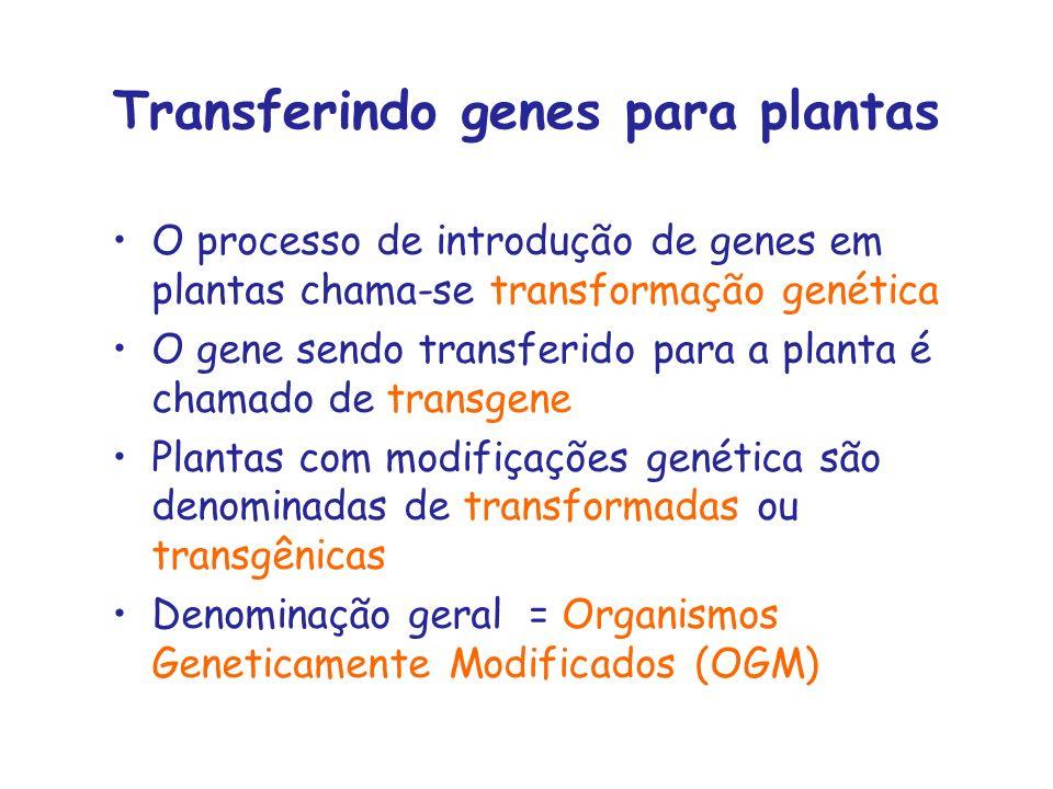 Transferindo genes para plantas