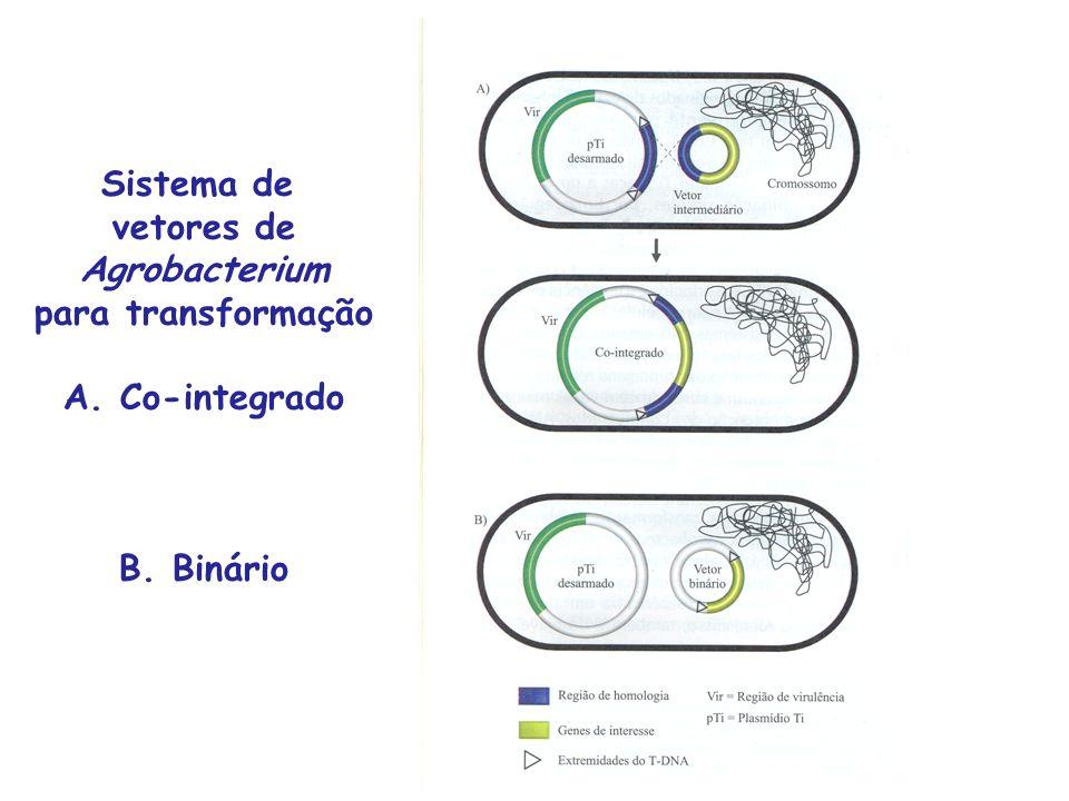 Sistema de vetores de Agrobacterium para transformação A. Co-integrado B. Binário