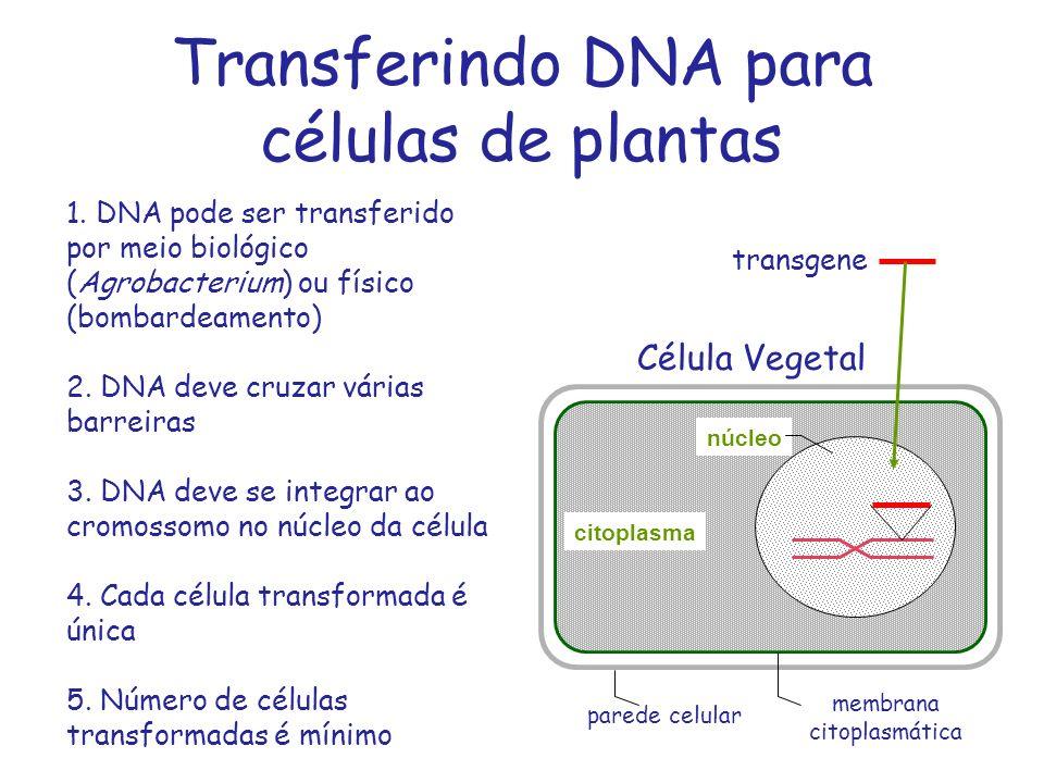 Transferindo DNA para células de plantas