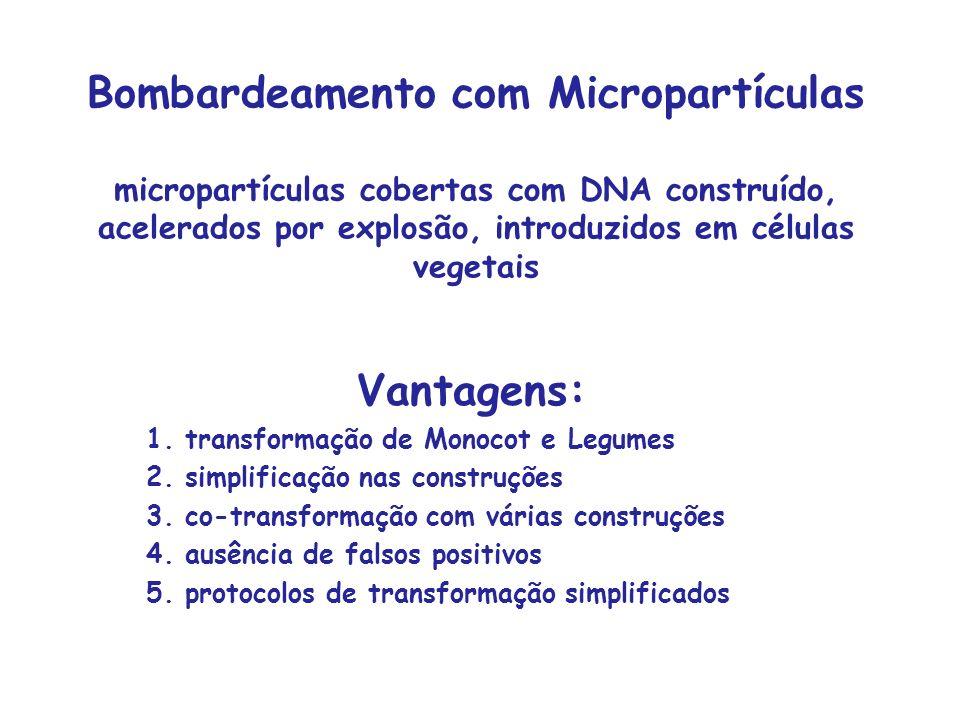 Bombardeamento com Micropartículas micropartículas cobertas com DNA construído, acelerados por explosão, introduzidos em células vegetais