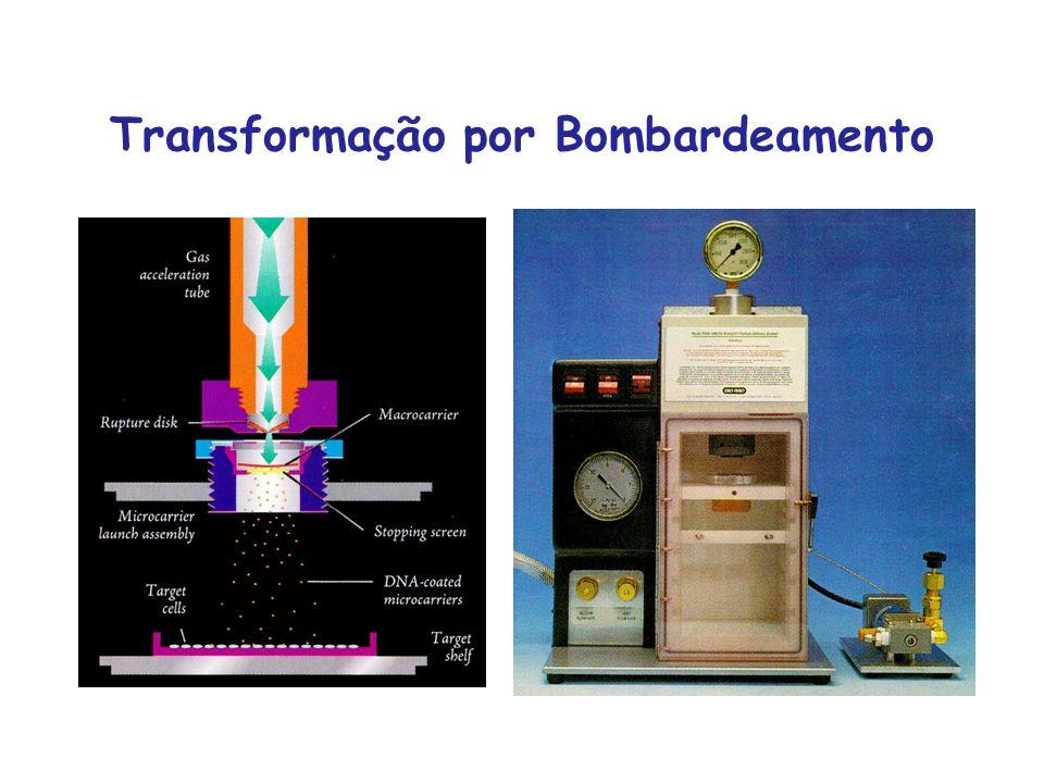 Transformação por Bombardeamento