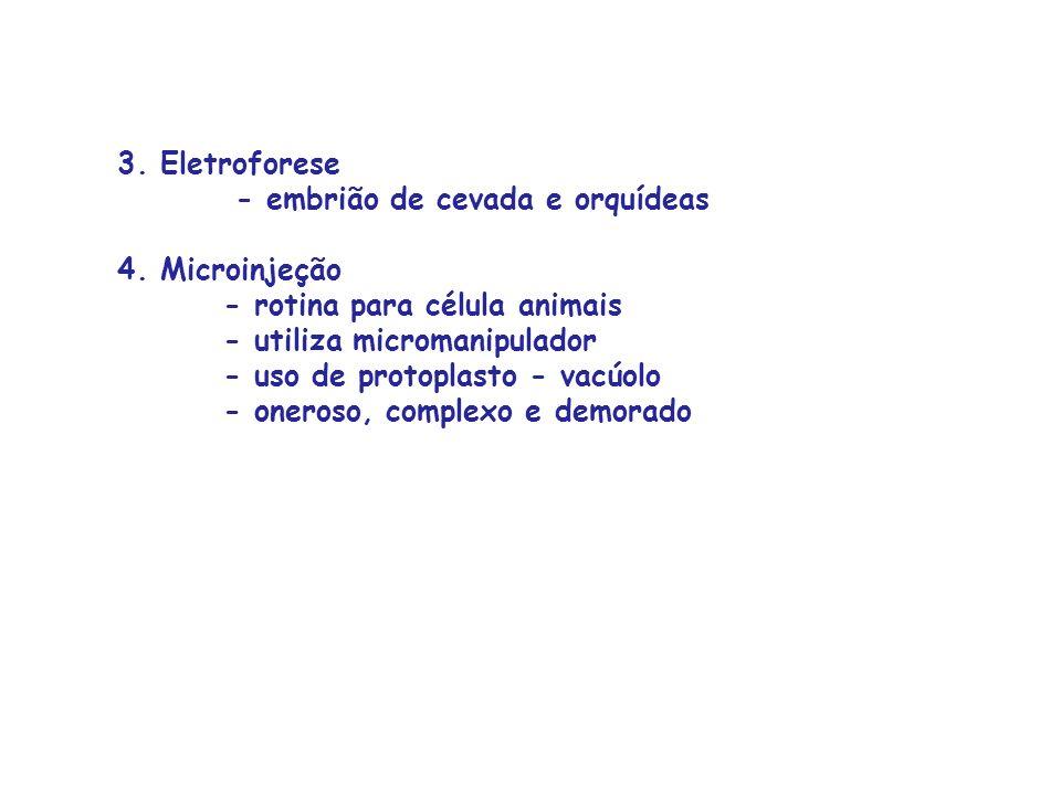 3. Eletroforese. - embrião de cevada e orquídeas 4. Microinjeção