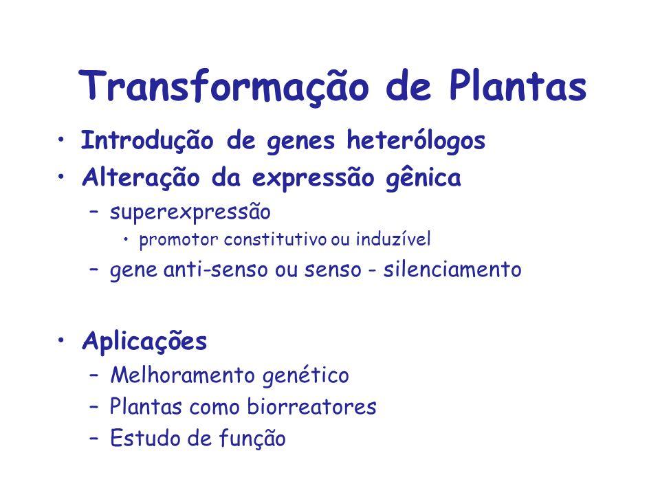 Transformação de Plantas