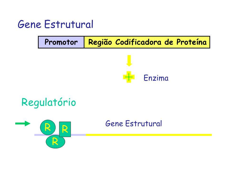 Gene Estrutural Regulatório R R R Promotor