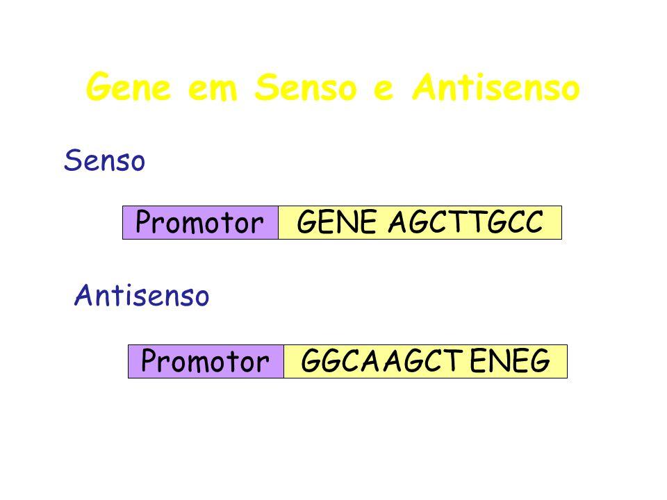 Gene em Senso e Antisenso