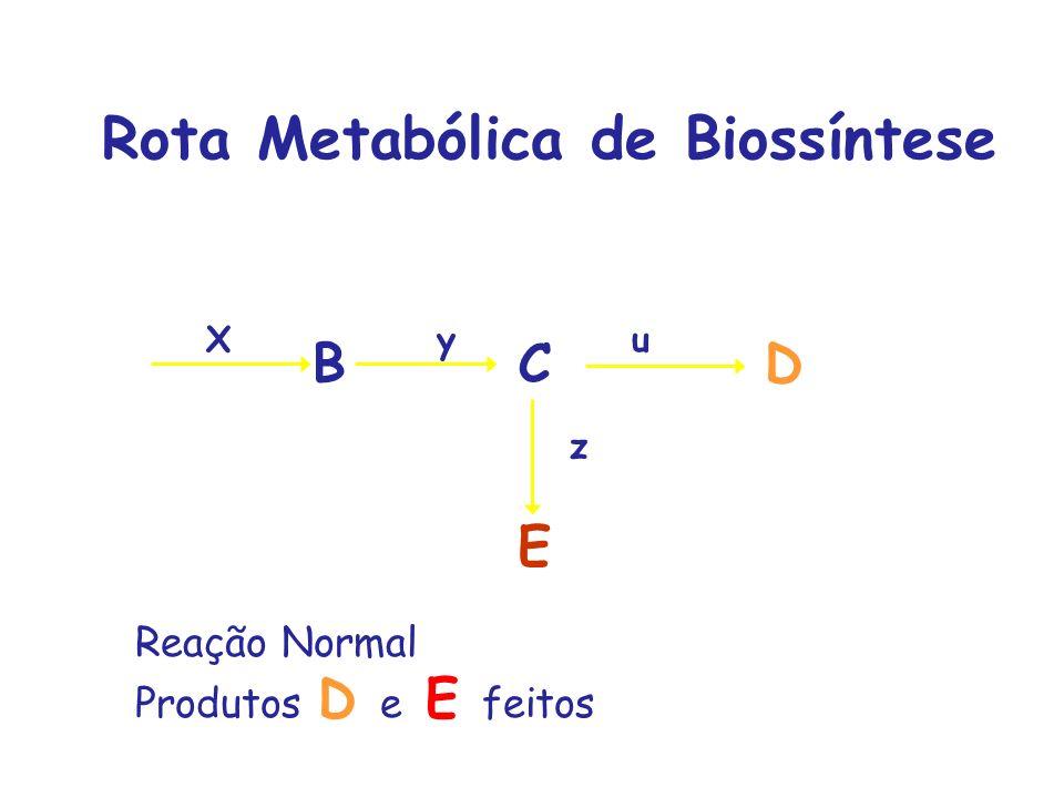 Rota Metabólica de Biossíntese