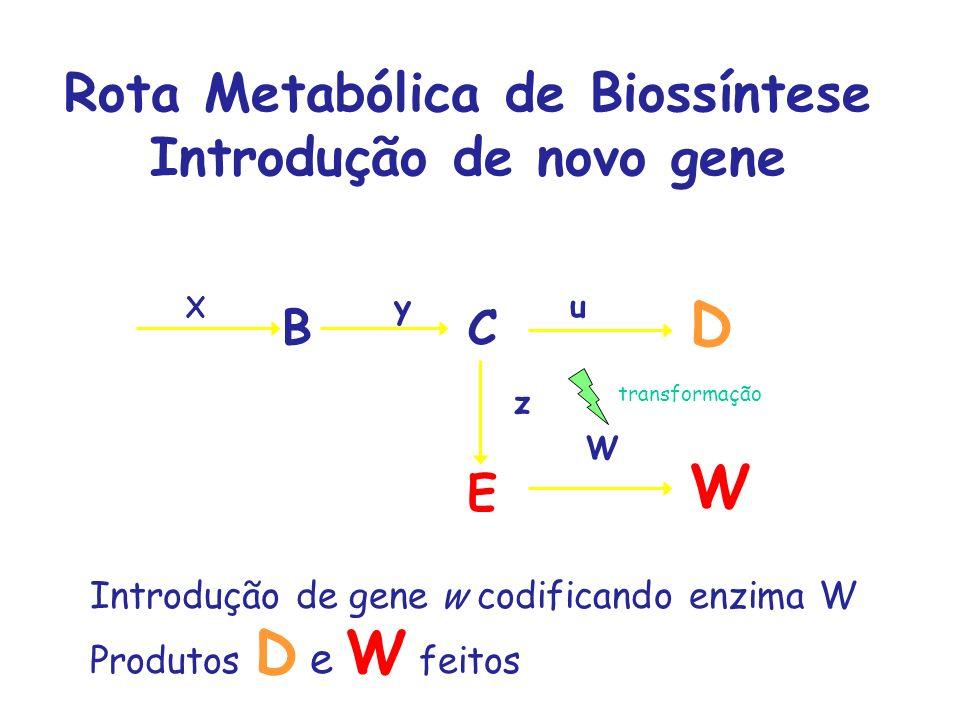 Rota Metabólica de Biossíntese Introdução de novo gene
