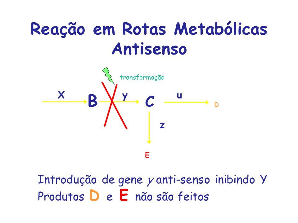 Reação em Rotas Metabólicas Antisenso