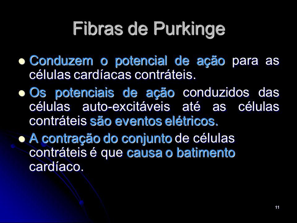 Fibras de Purkinge Conduzem o potencial de ação para as células cardíacas contráteis.