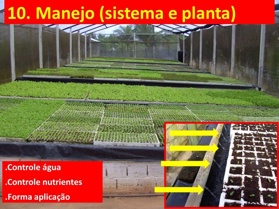 10. Manejo (sistema e planta)